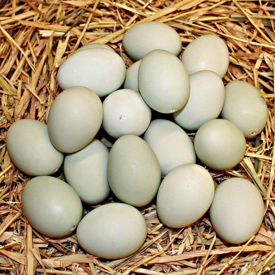 Fresh Duck Egg | YongSoonEggs